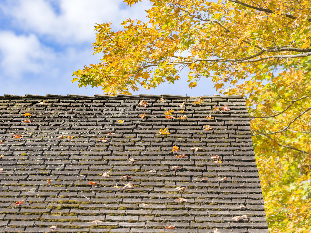 Need to Replace Your Roof?